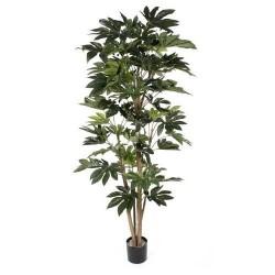 Japonica multi tree