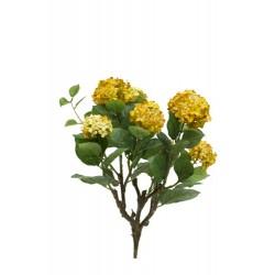 Mata de hortensia de 7 ramas