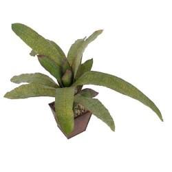 Planta bromeliad (Sin maceta)
