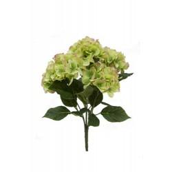 Bush de hortensia x 7