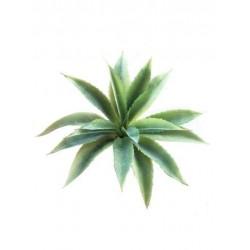 Aloe mini