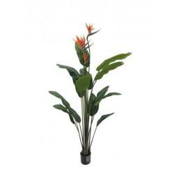 Planta sterlitzia con ave del paraíso 150 cm