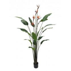 Planta sterlitzia con ave del paraíso180 cm