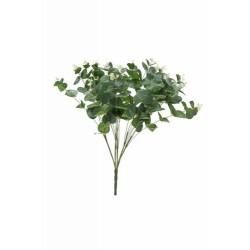 Pomo eucalipto x 5