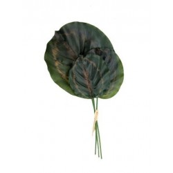 Set x 3 hojas sandia