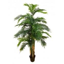 Palmera areca x 4 205 cm
