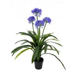 Planta agapanthus x 4 100 cm