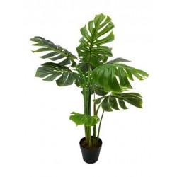 Planta mostera 110 cm